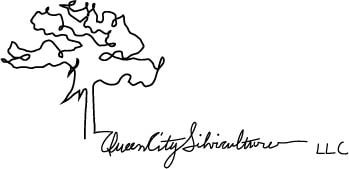 QUEEN CITY SILVICULTURE